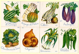 8 Images Chromos, Légumes Du Potager. - Kaufmanns- Und Zigarettenbilder