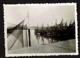Photo 9 X 6 Cm - 1947 - Ostende - Port - Bateaux De Pêche O49 - O96 - O91..- Voir Scan - Orte