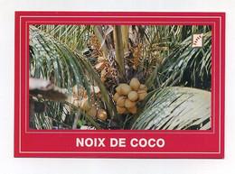 CP Béninoise Utilisée. Noix De Coco. Cocotier. Bénin (ex-Dahomey) Photo E. Hazoumé. Editions Sapec, Cotonou - Trees