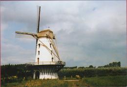OORDEGEM - Lede Fauconniersmolen - Molen Windmolen Moulin A Vent Windmill (in Zeer Goede Staat) - Lede