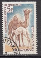 Mauritanie, Mauritania, Chameau, Camel, Dromadaire, Allaitement, Breast Feeding - Francobolli