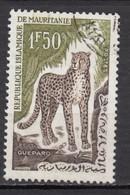 Mauritanie, Mauritania, Félin, Wildcat, Guépard - Felini