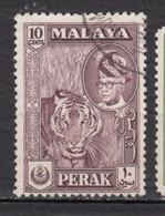 Malaya, Perak, Tigre, Tiger, Félin, Wildcat - Felini