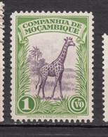 Moçambique, Mazambie, Girafe, Giraffe - Giraffe