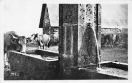 48-PATURAGE DANS L AUBRAC-N°T2636-A/0305 - France
