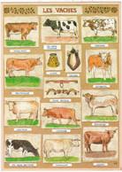 Animaux & Faune : VACHES : Les Vaches - Cows ( Divers Races Française ) - C.p.m. Grand Format - - Cows