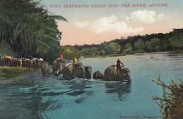 MYSORE , India , 00-10s ; Wild Elephant Taken Into The River - Elefanten