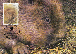 Belarus 1995 Maxicard Sc #117 300r European Beaver WWF - Belarus