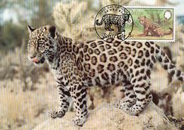 Belize 1983 Maxicard Sc #689 5c Jaguar WWF - Belize (1973-...)