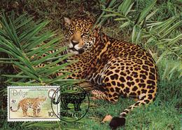 Belize 1983 Maxicard Sc #690 10c Jaguar WWF - Belize (1973-...)