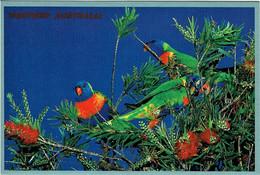 Colourful Rainbow Lorikeets Feeding On Bottlebrush Seeds, Western Australia - Unused - Non Classificati