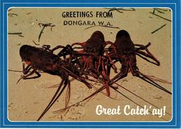 Crayfish, Greetings From Dongara, Western Australia - Unused - Non Classificati