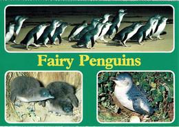 Fairy Penguins, Phillip Island, Victoria - Unused - Australia