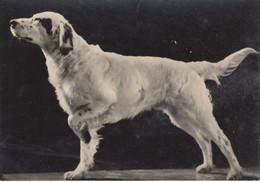 CARTOLINA  - CANE - DOG - CHIEN - PERRO - UND - SETTER - VIAGGIATA 1958 - Chiens