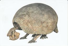 Postcard - Natural History Museum - Glyptodon 2.5m Long New - Non Classificati