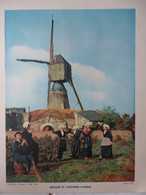 GRANDE PHOTO : MOULIN D'ANJOU- 1954- - Pays De Loire