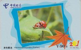 Télécarte Chine - ANIMAL - COCCINELLE - LADYBIRD China Telecom Erotic Phonecard - MARIENKÄFER - 35 - Coccinelle