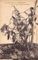 Madagascar - Liane De Vanille En Pleine Fructification - Ed. Em. Prudhomme - Madagascar