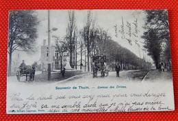 THUIN  -    Avenue Des Drèves   -  Souvenir De Thuin - Thuin