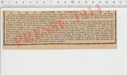 Presse 1914 Culture Du Cresson Plante Cressonnière Au Jardin 231S - Non Classificati
