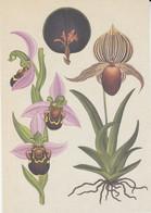 Postcard - Botanicum - Orchids - Full Details On The Rear -  New - Cartoline