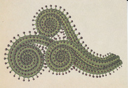 Postcard - Botanicum - Carnivorous Plants - Portuguese Dewy Sundew -  New - Cartoline