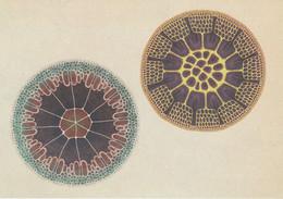 Postcard - Botanicum - Algae See Details On The Rear -  New - Cartoline