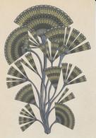 Postcard - Botanicum - Algae - Licmophora -  New - Cartoline
