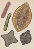 Postcard - Botanicum - Algae - See Rear For Details -  New - Cartoline