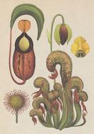 Postcard - Botanicum - Carnivorous Plants - See Details On The Rear -  New - Cartoline