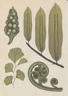 Postcard - Botanicum - Ferns - Details On The Rear -  New - Cartoline