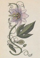 Postcard - Botanicum - Vines And Creepers - Purple Passion Flower -  New - Cartoline