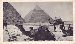 CP Publicitaire EGYPTE Médicale Ionyl En 1951 Pour LIMOGES FRANCE - Posta Aerea