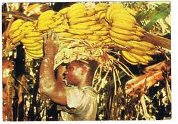 CPA.Saint Vincent.   Récolte De Bananes.     Pub Au Dos. (AA2.7) - Saint Vincent E Grenadine