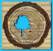 España. Spain. 2020. Flora. Olmo. Cabeza Del Buey - Alberi