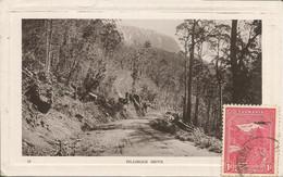 004861 - AUSTRALIA - TASMANIA - PILLINGER DRIVE - 1911 - Australien