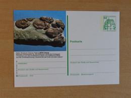 Prehistory, Fossil - Preistoria