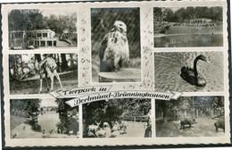 Dortmund  2 Ongelopen Postkaarten Tierpark - HauptBahnhof - Ed Cekade - Tram - Dortmund