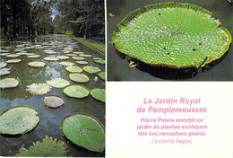 ** Lot De 3 Cartes ** ILE MAURICE Mauritius : JARDIN De PAMPLEMOUSSE Nénuphars Géants - Giant Water Lilies - CPM GF - Mauritius