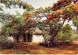 ** Lot De 5 Cartes ** ILE MAURICE Mauritius - Flamboyant Flame Tree Bome Boom Albero árbol - CPSM CPM GF Afrique Africa - Mauritius