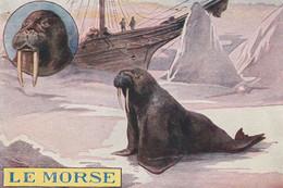 Chromos Image Le Morse - Autres