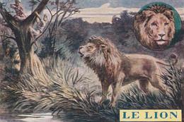 Chromos Image  Le Lion - Autres