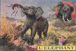 Chromos Image L'éléphant - Autres