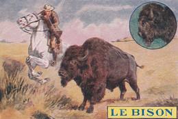 Chromos Image  Le Bison - Autres