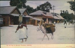 1909, Picture Postcard Sent From KINGSTON To Altona - Giamaica (...-1961)