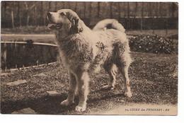 L50C422 - Chien Des Pyrénées - BR N°79 - Dogs