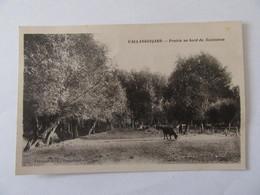 Vallangoujard (Val D'Oise) - Prairie Du Bord Du Sausseron - Carte Non-circulée - Francia