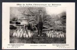 Effets Du Sulfate D'Ammoniaque Sur Betteraves: Rendement à L'hectare - Culture