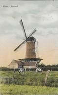 90) Hamont - Molen - 1911 - Hamont-Achel