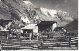 CPSM France 73 Savoie Peisey Nancroix Les Lanches Le Mt Pourri 3782m - Altri Comuni